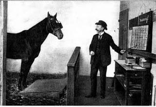 il cavallo Clever Hans sapeva eseguire operazioni aritmetiche con molta precisione